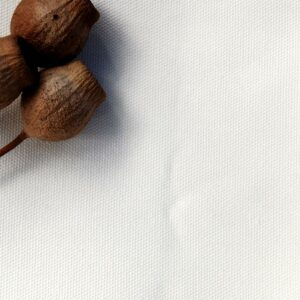 Organic Cotton Canvas - Ivory